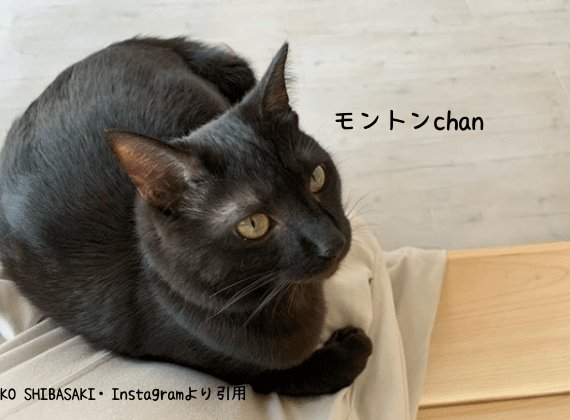 女優柴咲コウさんの愛猫のモントン