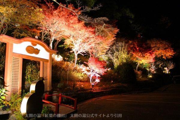 「太閤四季彩園~官兵衛古道」紅葉の棚田のライトアップ
