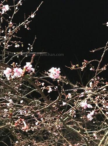 播州清水寺境内の秋に咲く花