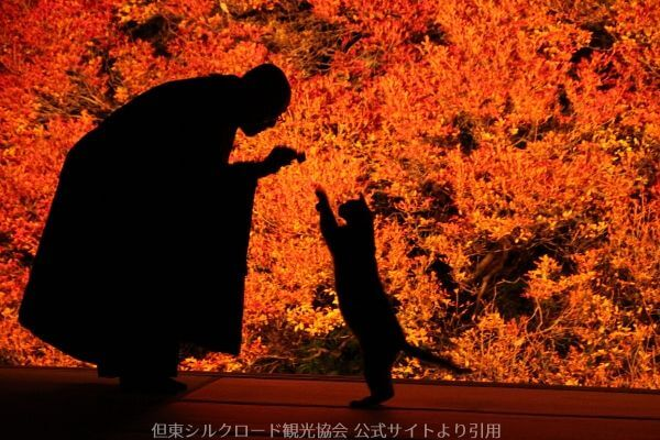 安国寺本堂越しのドウダンツツジと住職と猫