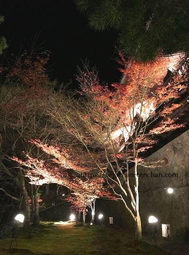 播州清水寺境内のモミジのライトアップ