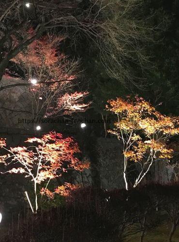 播州清水寺境内の楓のライトアップ