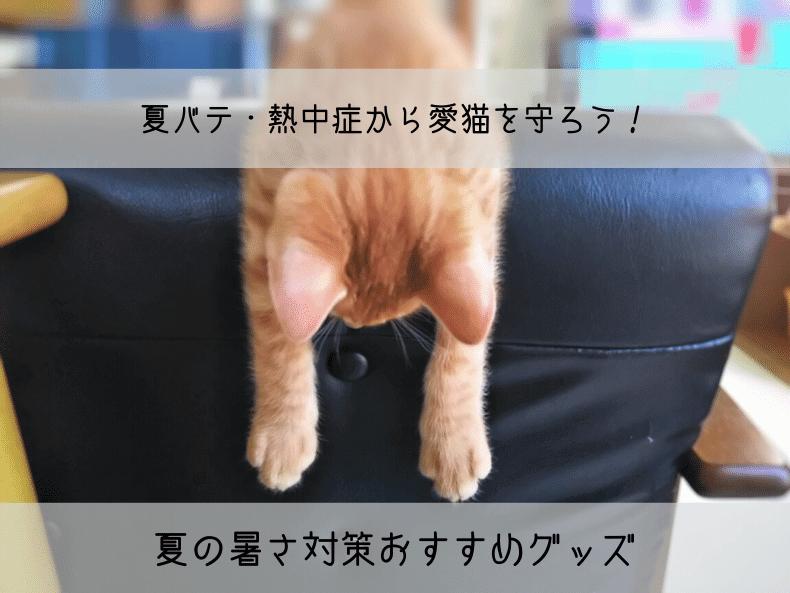 猫の夏の暑さ対策グッズアイキャッチ