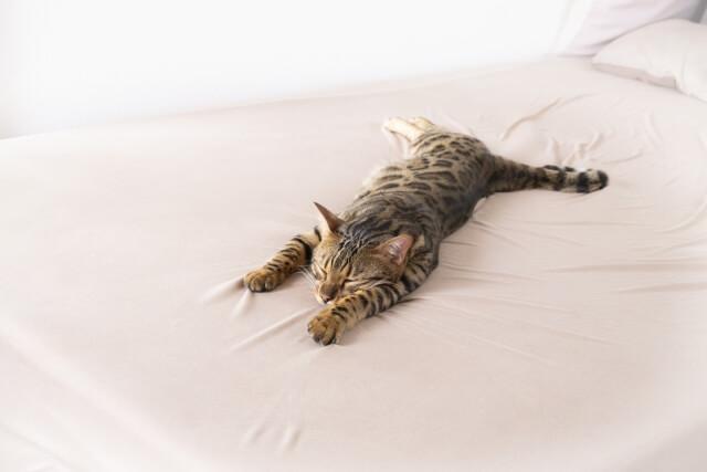 暑さで伸び切っている猫